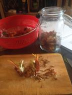 Cutting the Echinacea flowers